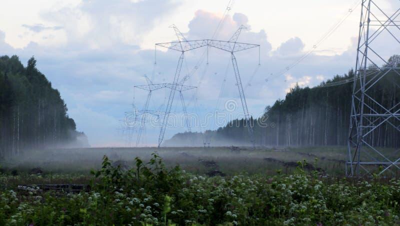 输电线在森林里 库存图片