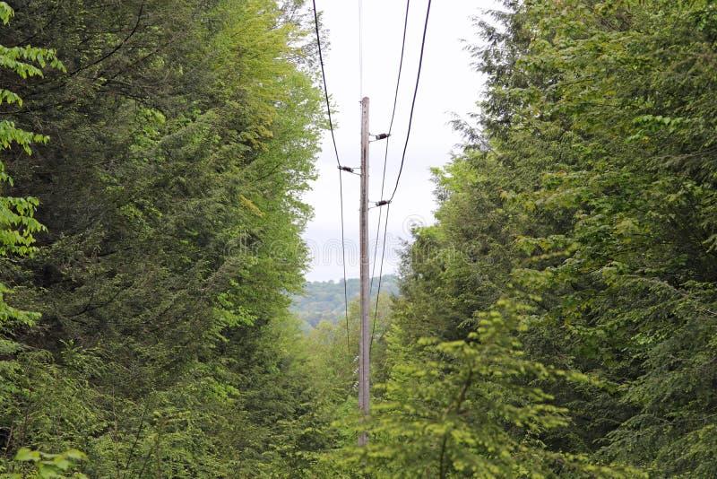 输电线通过树 免版税库存图片