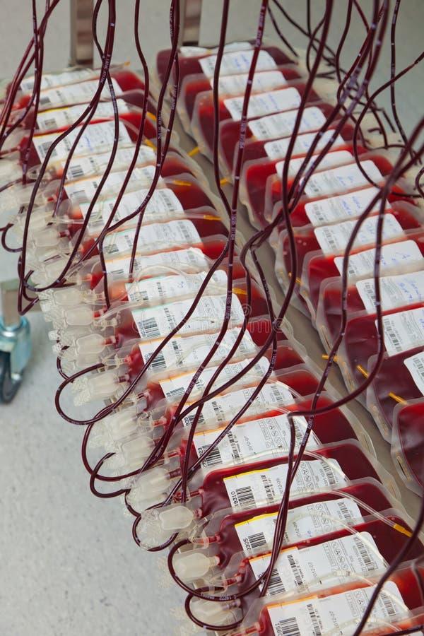 输血人实验室 库存图片