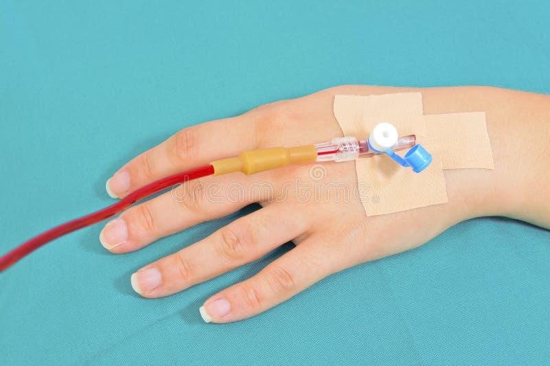 输血 库存图片