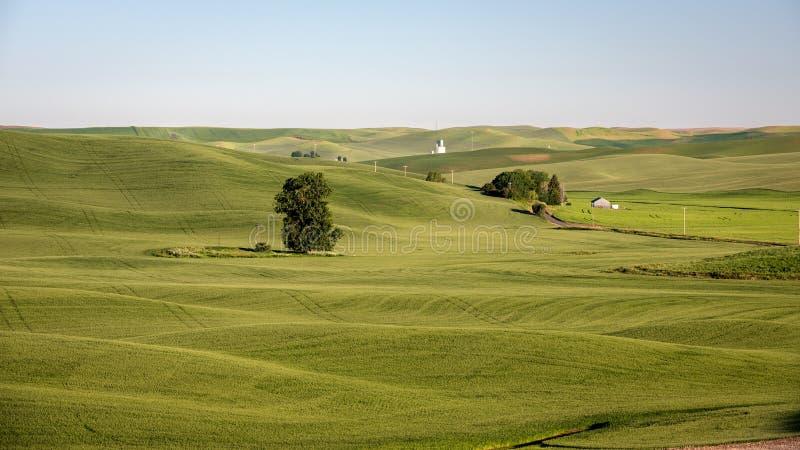 辗压东部华盛顿州的农田 免版税库存图片
