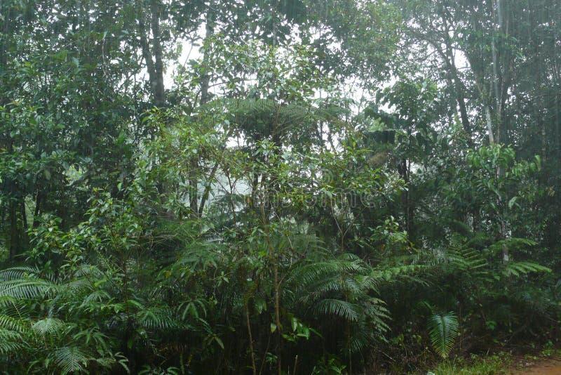 辛哈拉加森林保护区 库存图片