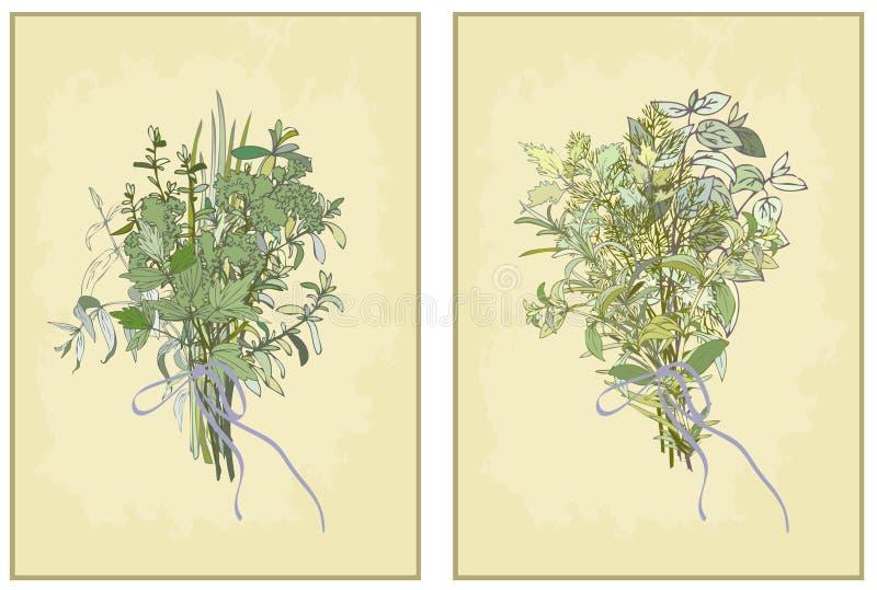 辣草本。 新鲜的草本的汇集。 Illustrati 向量例证