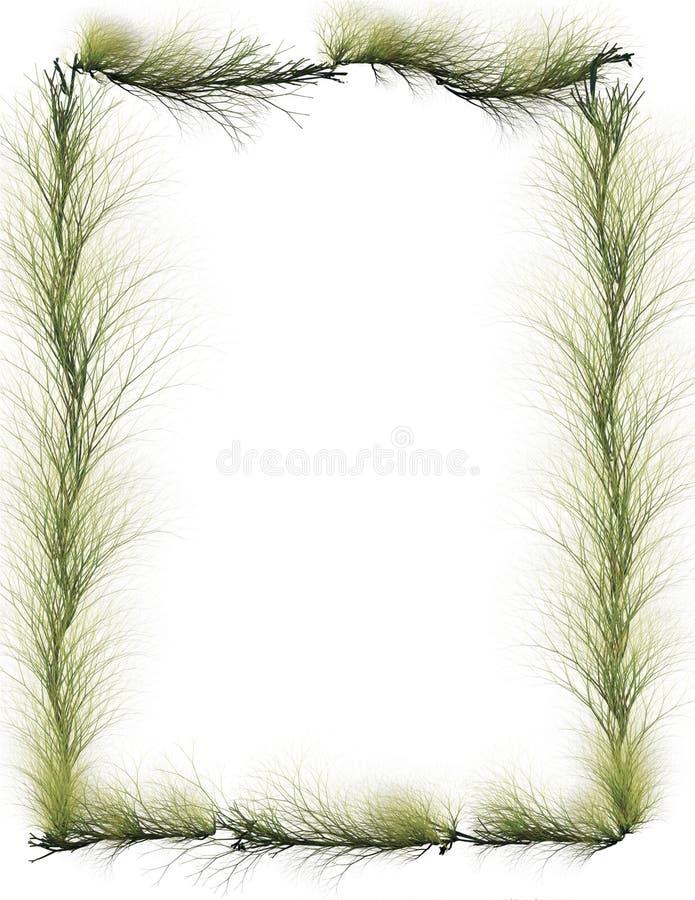 边界分支常青树 免版税图库摄影