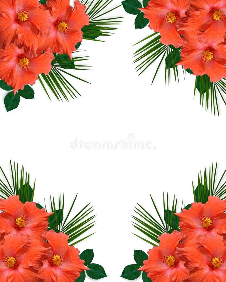 边界开花热带的木槿 向量例证