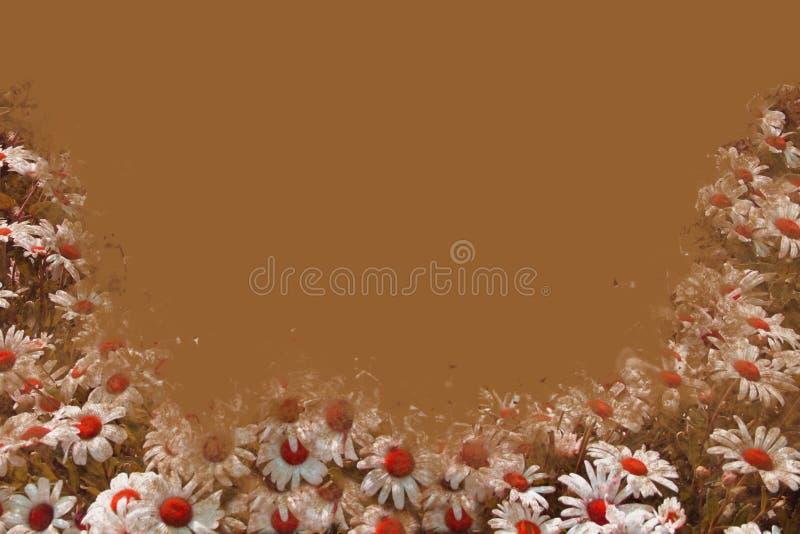 边界棕色雏菊 免版税库存照片