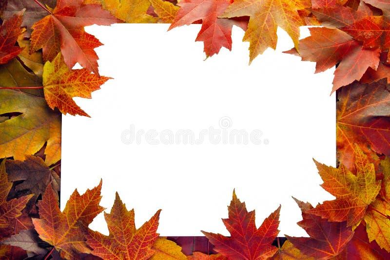边界秋天留下槭树 图库摄影