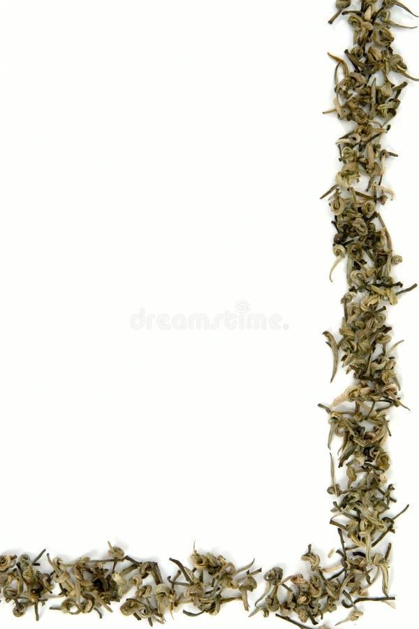 边界绿茶 免版税图库摄影