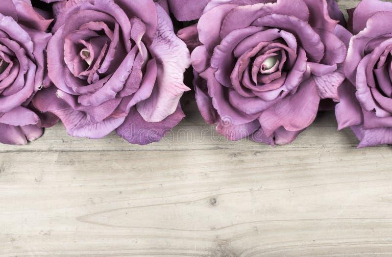 边界紫色玫瑰 库存照片