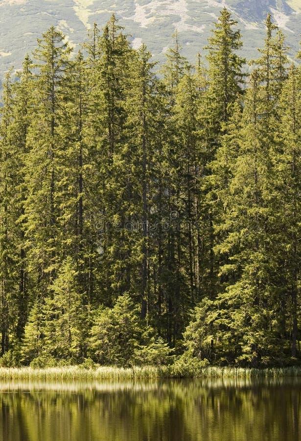 边缘森林 图库摄影
