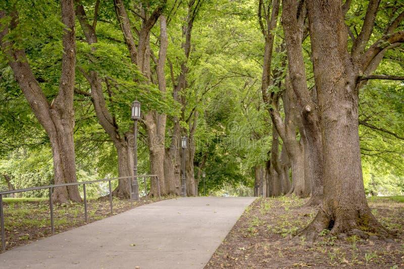 边路带领树森林  库存图片