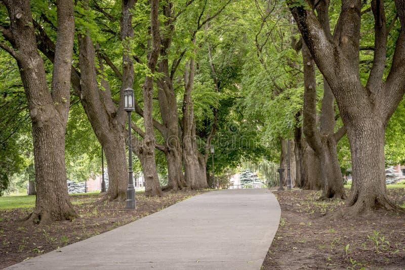 边路标示用树在爱达荷公园 免版税库存照片