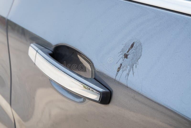 边门与排汇物鸟的汽车灰色 免版税库存图片