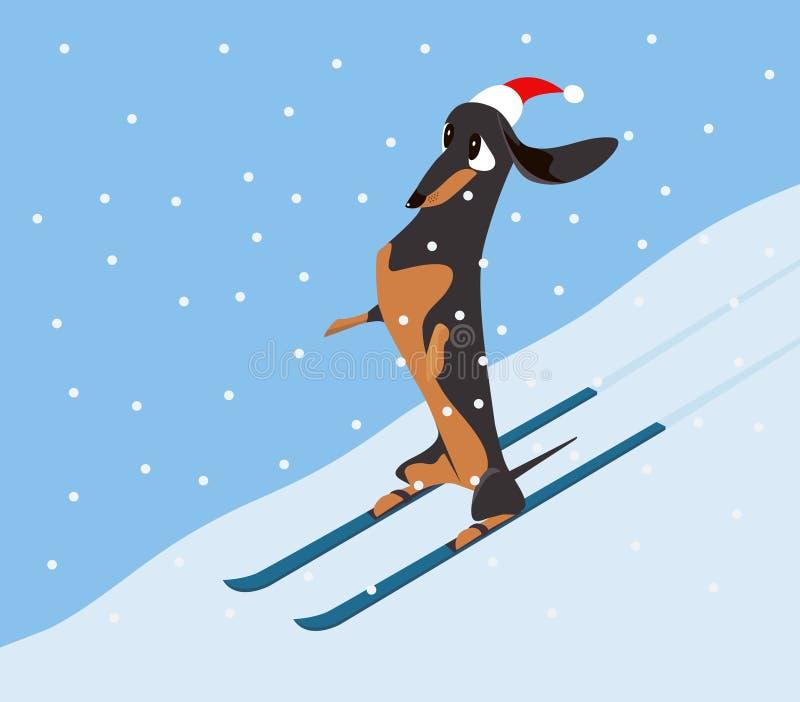 达克斯猎犬下降在滑雪的山坡 皇族释放例证