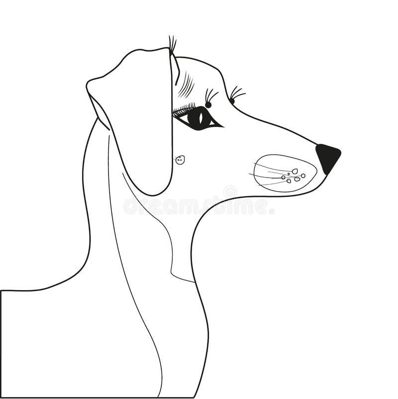 达克斯猎犬在外形的品种狗与达克斯猎犬品种的美丽的热忱的眼睛 皇族释放例证