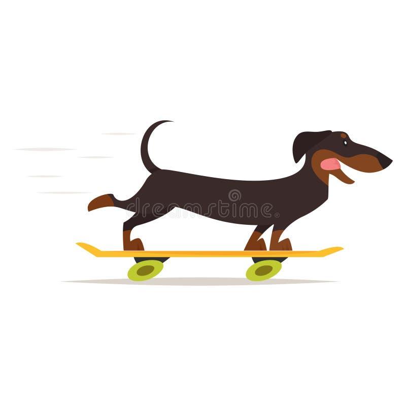 达克斯猎犬狗骑马滑板 皇族释放例证
