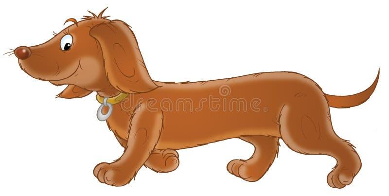 达克斯猎犬 向量例证
