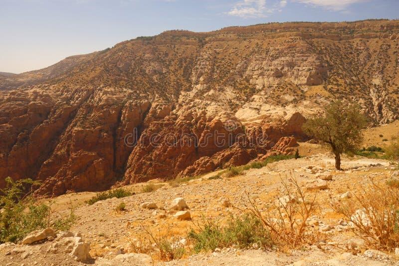 达娜生物圈储备约旦 免版税库存图片