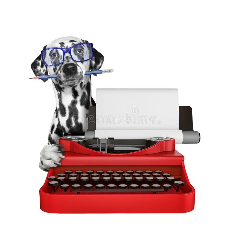 达尔马希亚狗在控制台打字机键盘键入 查出在白色 皇族释放例证