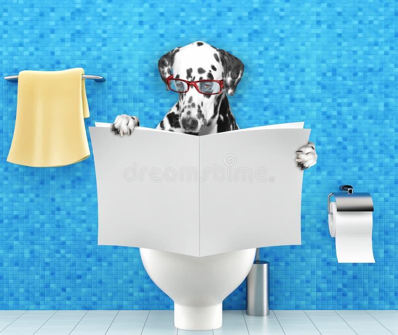 达尔马希亚狗坐有消化问题或便秘读书杂志或报纸的一个马桶座 免版税库存图片