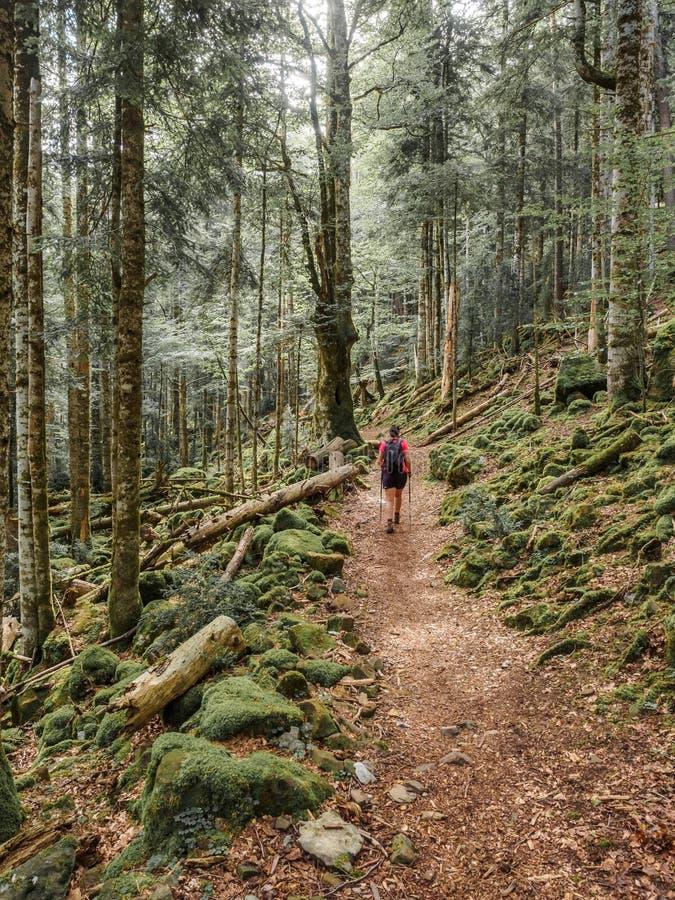 迁徙入森林的女孩 免版税库存照片