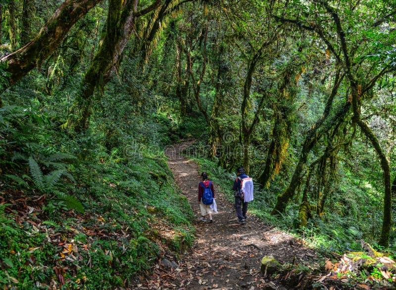 迁徙在森林里的人们 免版税库存照片