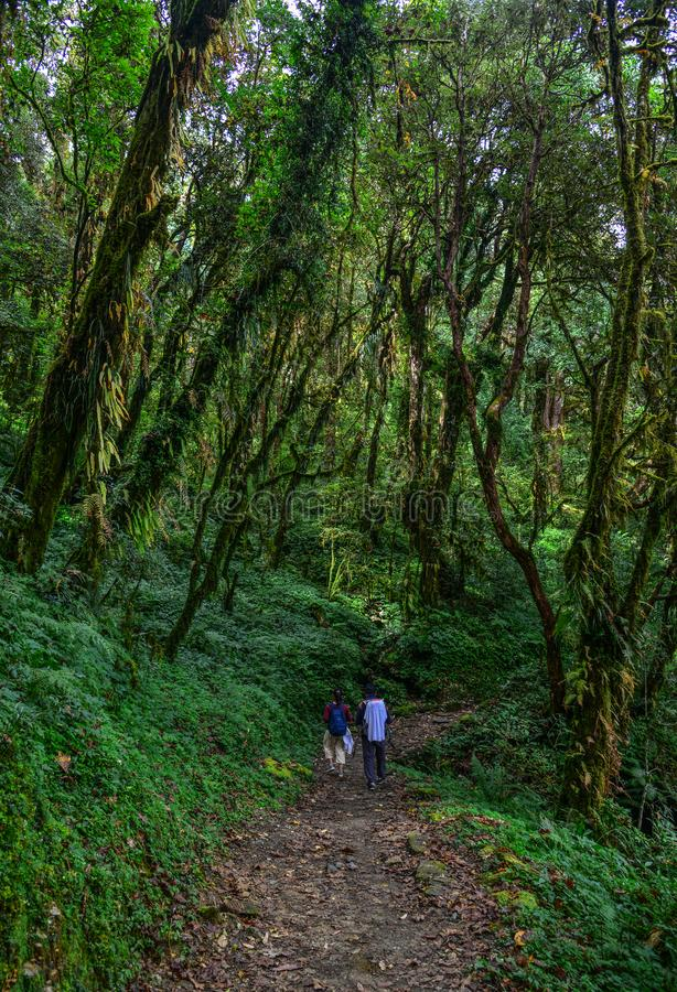 迁徙在森林里的人们 免版税库存图片