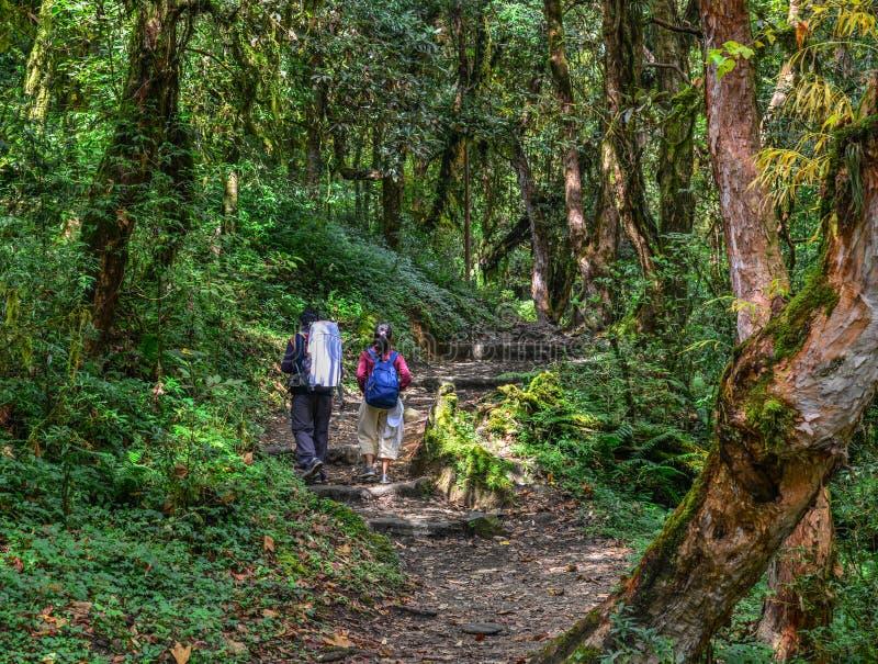 迁徙在森林里的人们 库存图片