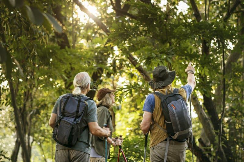 迁徙在森林里的前辈 免版税图库摄影