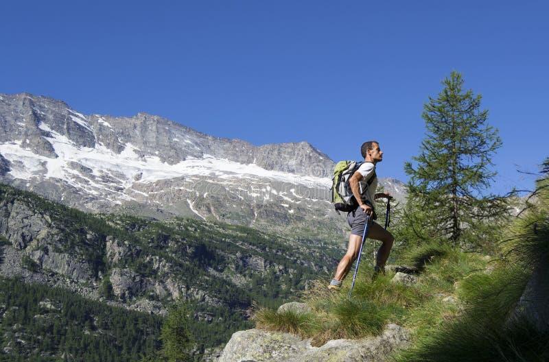 迁徙在阿尔卑斯 图库摄影