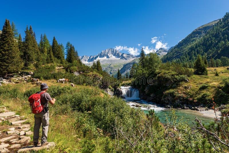 迁徙在阿达梅洛山布伦塔河意大利国立公园  图库摄影