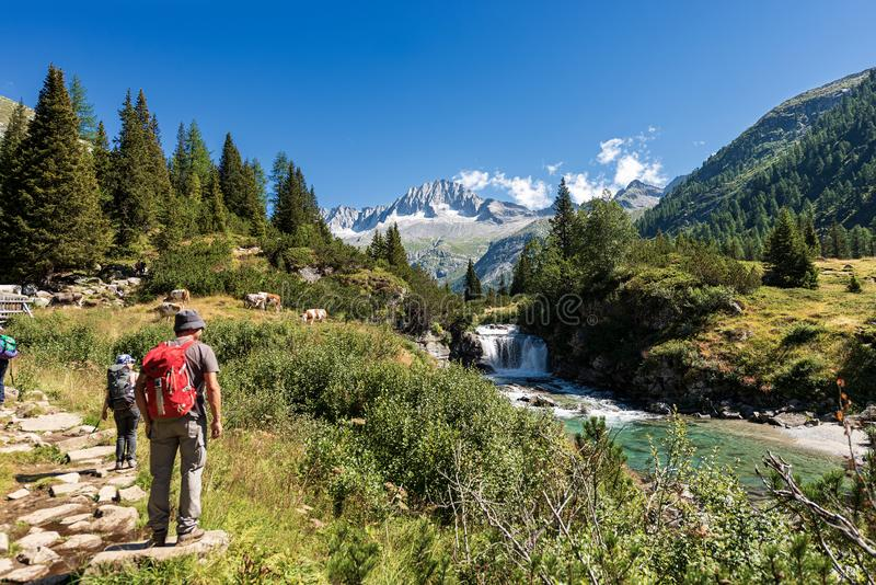 迁徙在阿达梅洛山布伦塔河意大利国立公园  库存照片