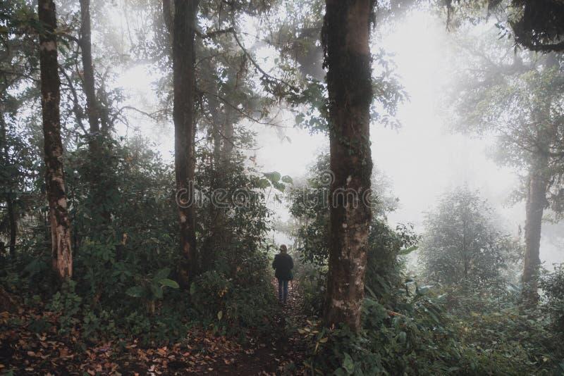 迁徙在雨林森林密林的妇女  库存照片