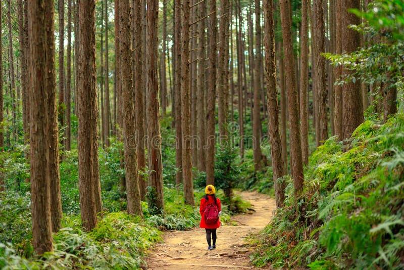 迁徙在高柏森林里在日本 库存照片