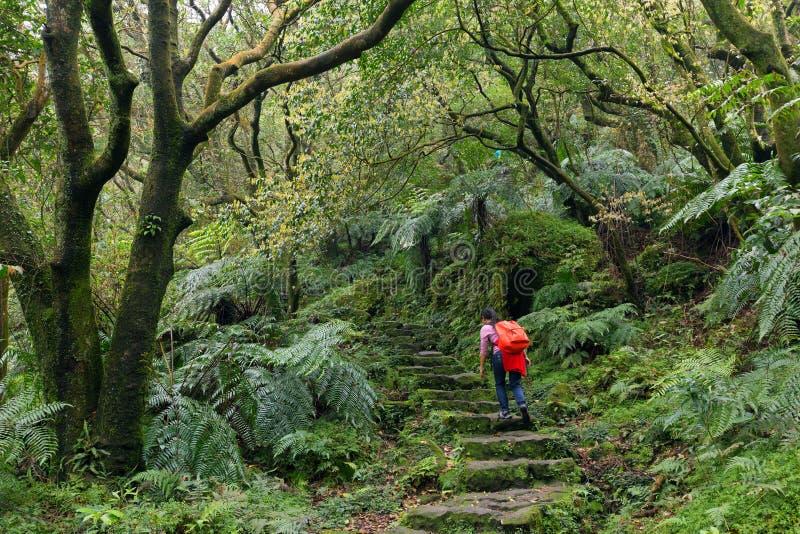 迁徙在绿色suntropical森林里的妇女 免版税库存图片
