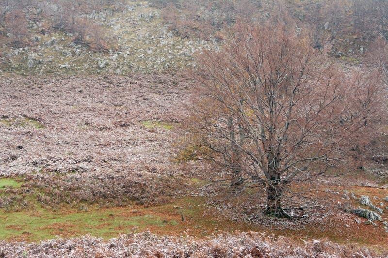 迁徙在Mehedinti山在秋天 免版税库存照片