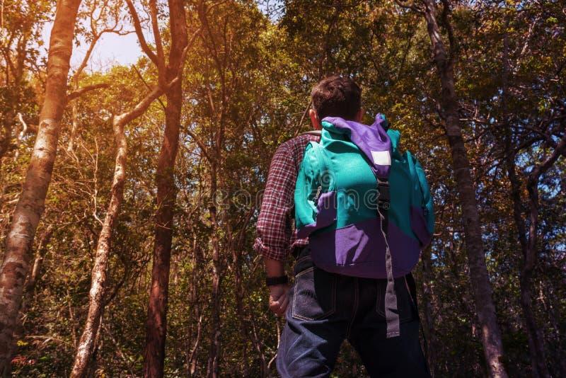 迁徙或远足在密林的男性背包徒步旅行者旅行 免版税库存照片