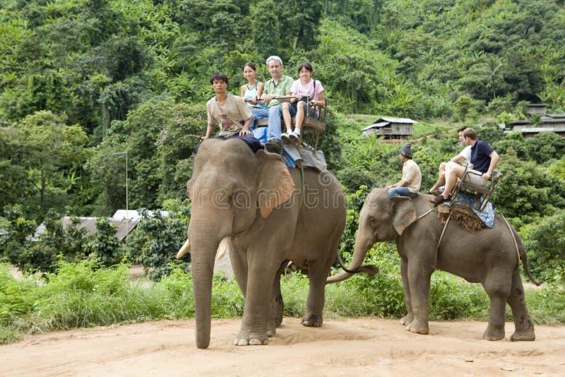 迁徙的大象 库存图片