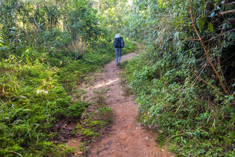 迁徙的足迹的人们在雨林里 免版税图库摄影