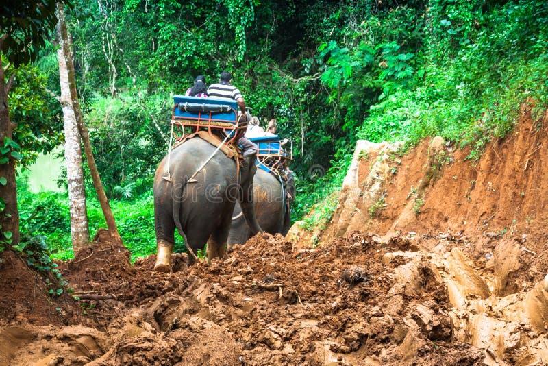 迁徙通过密林的大象在北泰国 免版税图库摄影