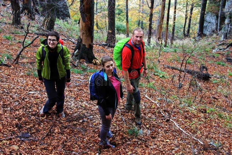迁徙通过森林的三个朋友 免版税库存照片