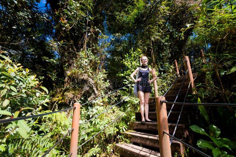 迁徙金马仑高原生苔的森林 免版税图库摄影