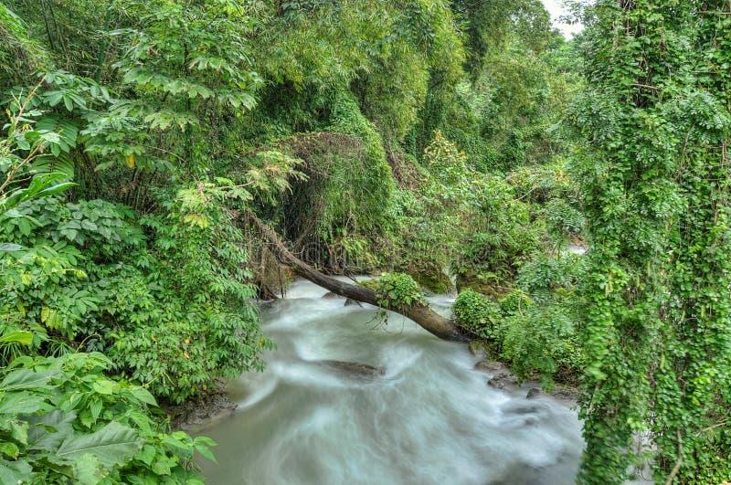 迅速河在牙买加 库存图片