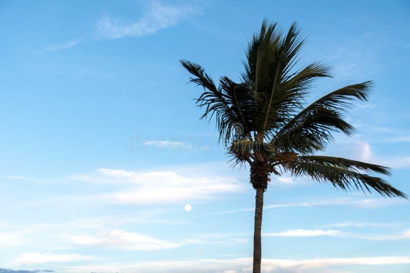 迈阿密海滩/FL,海滩的美国视图从南Pointe码头的 免版税库存图片