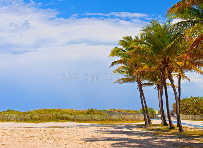 迈阿密海滩佛罗里达,在一个美好的夏日的棕榈树 库存图片