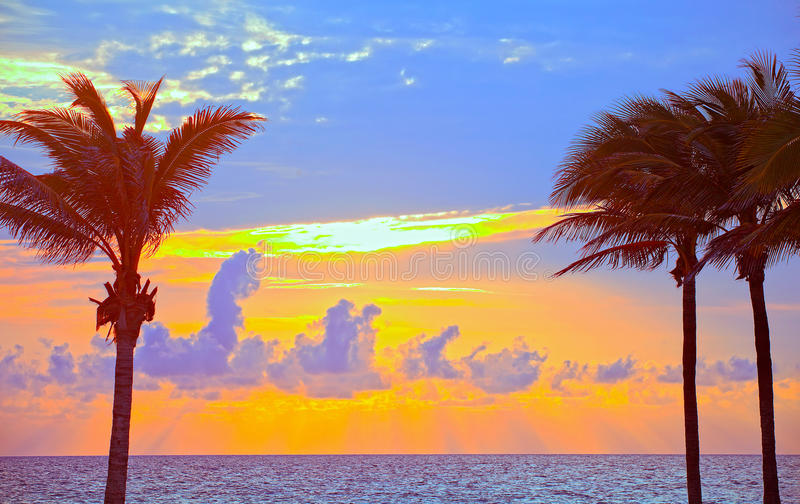 迈阿密海滩,佛罗里达五颜六色的夏天日出或日落与棕榈树 库存照片
