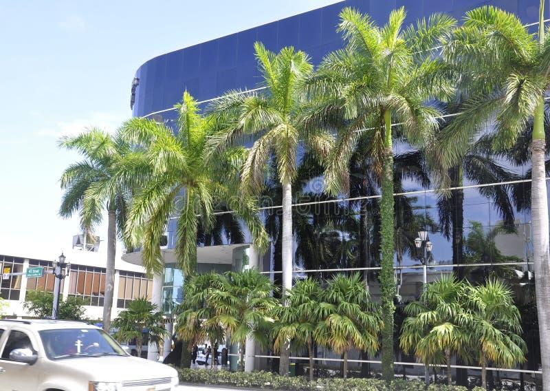 迈阿密海滩,威严第9 :常青棕榈树在从佛罗里达美国的迈阿密海滩 库存图片