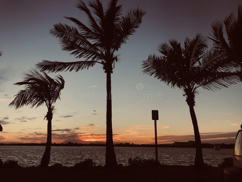 迈阿密视图 库存图片