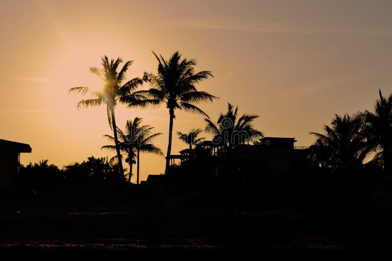 迈阿密,佛罗里达棕榈树日落 免版税库存图片