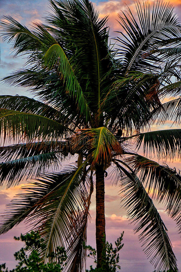 迈阿密维切 库存照片